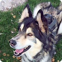 Adopt A Pet :: SPARKY-Adoption Pending - Boise, ID
