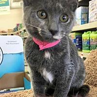 Adopt A Pet :: Penny - Buffalo, NY