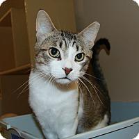 Adopt A Pet :: Starkson - Rochester, MN