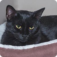 Adopt A Pet :: Dahlia - Elmwood Park, NJ