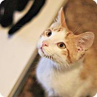 Adopt A Pet :: Egypt - Lincoln, NE