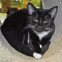 Adopt A Pet :: Mouse - Suwanee, GA