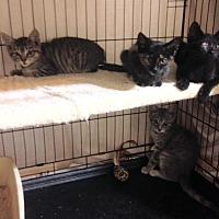 Adopt A Pet :: Angela, Angel, Micah, Michael - Brooklyn, NY