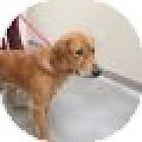 Adopt A Pet :: Dakota - Denver, CO