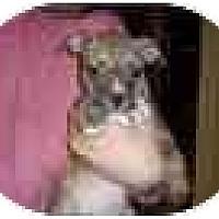 Adopt A Pet :: Brendan - Fostered in CT - Adamsville, TN