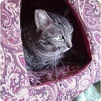Adopt A Pet :: Lizzie - Modesto, CA