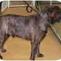 Adopt A Pet :: DOZER - North Port, FL
