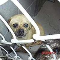 Adopt A Pet :: Otis - Houston, TX