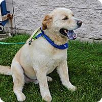 Adopt A Pet :: Teddy - Tipp City, OH