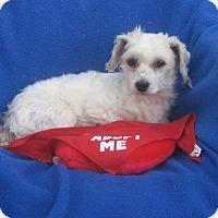 Adopt A Pet :: Lovey-WATCH MY VIDEO!!! - Irvine, CA