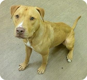 Hound (Unknown Type) Mix Dog for adoption in Parma, Ohio - Rigby