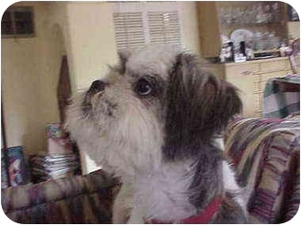 Lhasa Apso Mix Dog for adoption in Spring Valley, California - JACKSON-Adopted