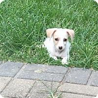 Adopt A Pet :: Prince - Houston, TX