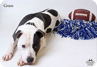 American Pit Bull Terrier Dog for adoption in Luling, Louisiana - Grace