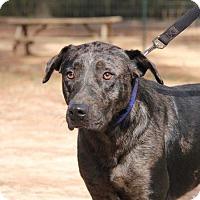 Adopt A Pet :: Chief - Ruston, LA