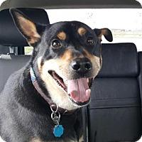 Adopt A Pet :: Bandit - Ogden, UT