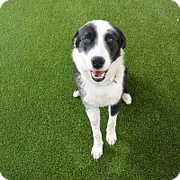 Adopt A Pet :: Joe - Meridian, ID