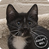 Adopt A Pet :: Tucker - Troy, OH