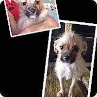 Adopt A Pet :: Jordan - Scottsdale, AZ