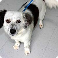 Adopt A Pet :: KENDRA - Salem, NH