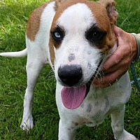 Adopt A Pet :: George is reduced! - Brattleboro, VT