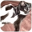 Photo 2 - Domestic Shorthair Kitten for adoption in Troy, Michigan - Mittens