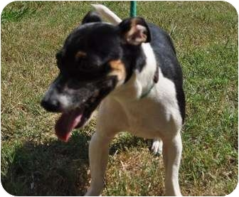 Jack Russell Terrier Mix Dog for adoption in Columbia, South Carolina - Jack