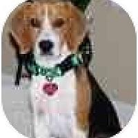 Adopt A Pet :: Clinton - Portland, OR