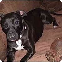 Adopt A Pet :: Dollie - Indianapolis, IN
