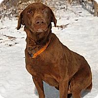 Adopt A Pet :: Barrett - Lewisville, IN