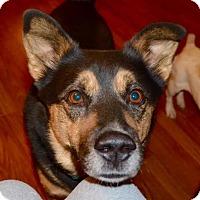 Adopt A Pet :: Buddy - Hamburg, PA