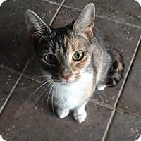 Adopt A Pet :: Jacqueline - Riverside, RI