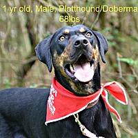 Adopt A Pet :: Atlas - Siler City, NC