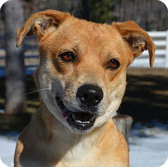 Welsh Corgi Mix Dog for adoption in Mountain Center, California - Monica