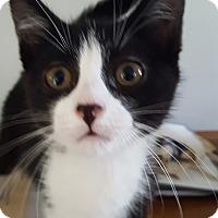 Adopt A Pet :: Nina 3 - Plainville, MA