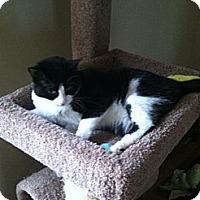 Adopt A Pet :: Korina - Harrisburg, NC