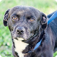 Adopt A Pet :: OMalley - Gainesville, FL
