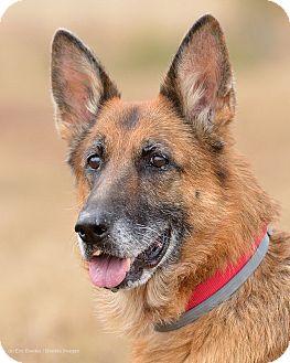 German Shepherd Dog Dog for adoption in Dacula, Georgia - Lillie