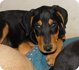 Doberman Pinscher Mix Dog for adoption in Von Ormy, Texas - Manny
