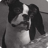 Adopt A Pet :: Zeus - Weatherford, TX