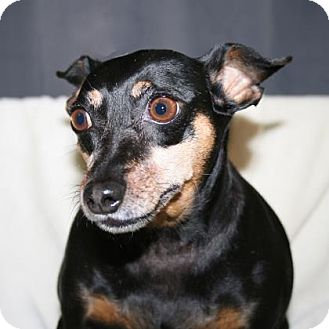 Mixed Breed (Small) Mix Dog for adoption in Bradenton, Florida - Madison