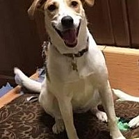 Adopt A Pet :: Clarice - DeSoto, IA