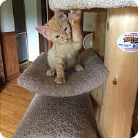 Adopt A Pet :: Charlie - Salem, OH