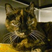 Adopt A Pet :: Patches - West Kennebunk, ME