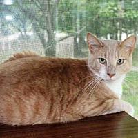 Adopt A Pet :: MISHA - Hampton Bays, NY