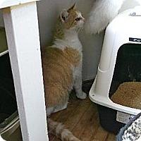 Adopt A Pet :: Tiny - Orillia, ON