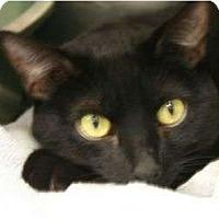 Adopt A Pet :: Mayra - Canoga Park, CA