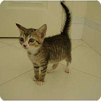Adopt A Pet :: Brook - Coral Springs, FL