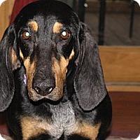 Adopt A Pet :: CELIA - Bluff city, TN