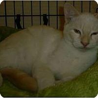 Adopt A Pet :: Merlin n Lee - lake elsinore, CA